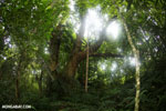 Siquirres rainforest [costa_rica_siquirres_0109]