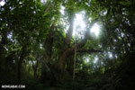 Siquirres rainforest [costa_rica_siquirres_0112]
