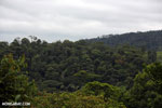 Siquirres rainforest [costa_rica_siquirres_0116]