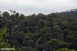 Siquirres rainforest [costa_rica_siquirres_0118]