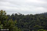 Siquirres rainforest [costa_rica_siquirres_0119]