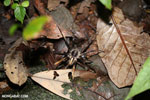 Spider [costa_rica_siquirres_0217]