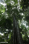 Siquirres rainforest [costa_rica_siquirres_0584]
