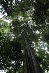 Siquirres rainforest [costa_rica_siquirres_0589]