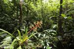 Bromeliad [costa_rica_siquirres_0605]