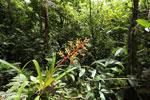 Bromeliad [costa_rica_siquirres_0606]