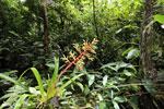 Bromeliad [costa_rica_siquirres_0607]