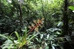 Bromeliad [costa_rica_siquirres_0608]