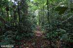 Rainforest trail [costa_rica_siquirres_0616]