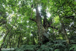 Costa Rica rainforest [costa_rica_siquirres_0663]