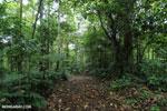 Rainforest trail [costa_rica_siquirres_0665]
