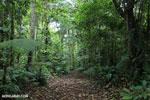 Rainforest trail [costa_rica_siquirres_0666]