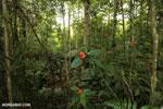Siquirres rainforest [costa_rica_siquirres_0669]