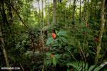 Siquirres rainforest [costa_rica_siquirres_0670]