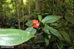Siquirres rainforest [costa_rica_siquirres_0671]
