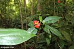Siquirres rainforest [costa_rica_siquirres_0672]