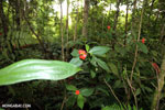 Siquirres rainforest [costa_rica_siquirres_0673]