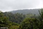 Costa Rica rainforest [costa_rica_siquirres_0674]