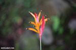 Plant [costa_rica_siquirres_0687]