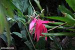 Plant [costa_rica_siquirres_0712]