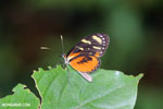 Butterfly [costa_rica_siquirres_0757]