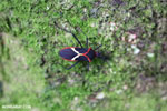 Bug [costa_rica_siquirres_0776]