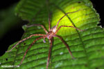Spider [costa_rica_siquirres_0974]