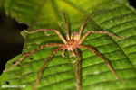 Spider [costa_rica_siquirres_0975]
