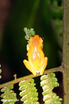 Tree frog [costa_rica_siquirres_1005]