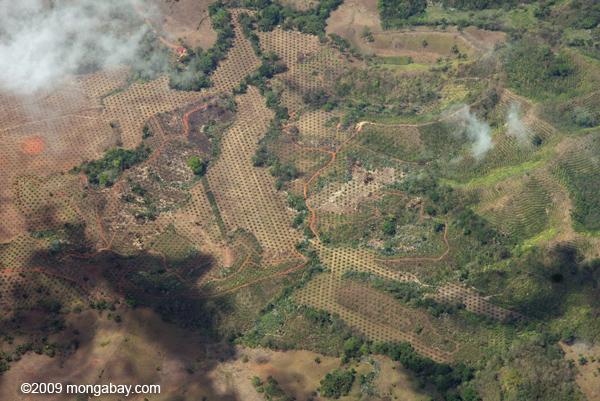 New oil palm plantation in Costa Rica. Photo by: Rhett A. Butler.