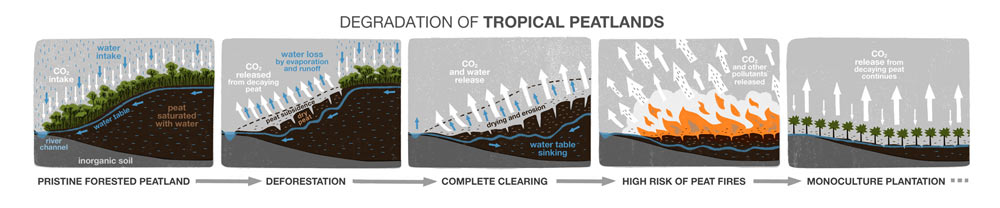 Illustration showing degradation of tropical peatlands