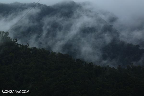 Mist rising from the Queensland rainforest [australia_babinda_boulders_004]