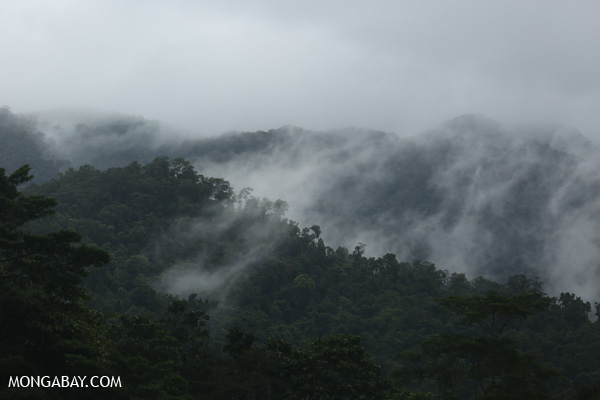 Mist rising from the Queensland rainforest [australia_babinda_boulders_017]