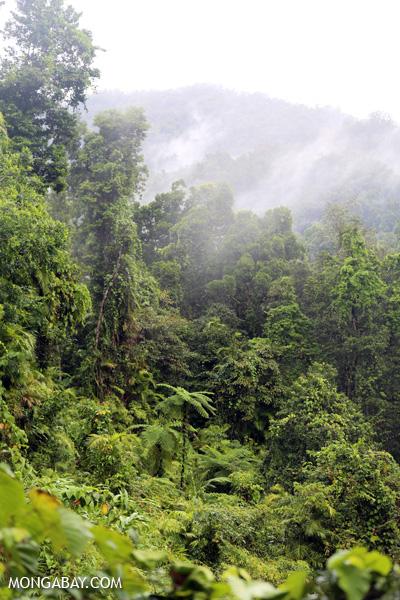 Tree fern in the Queensland rainforest [australia_babinda_boulders_056]