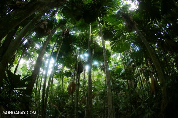 Australia 39 s small rainforest conservation steps for Australian rainforest