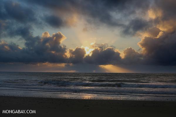 Sunrise in the Daintree [australia_daintree_057]