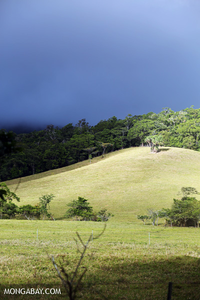 Pasture and rainforest in the Daintree