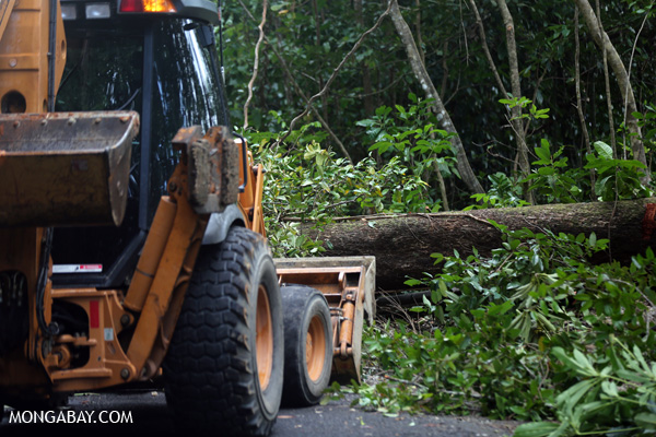 Downed tree and a bulldozer