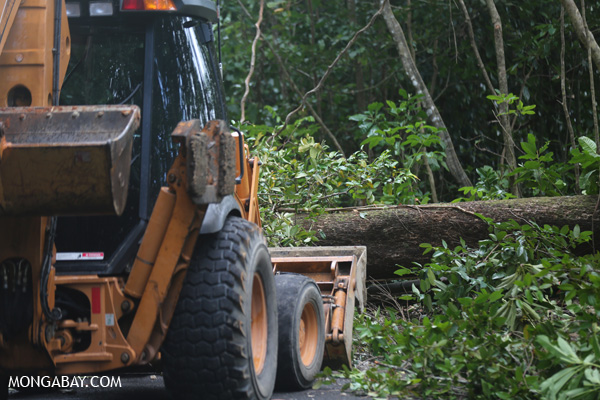 Downed tree and a bulldozer [australia_daintree_074]