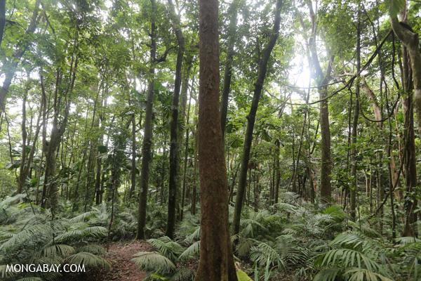 Forest on the Mount Sorrow trail [australia_daintrail_131]