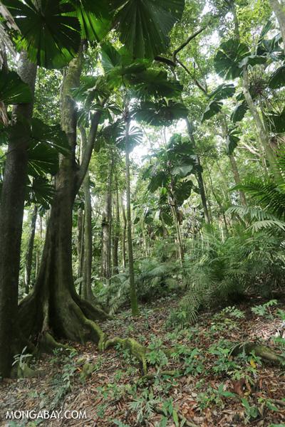 Forest on the Mount Sorrow trail [australia_daintrail_140]