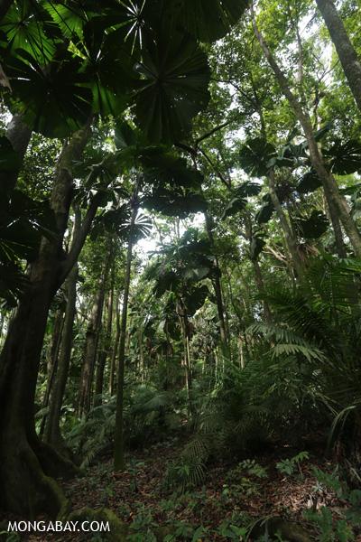 Forest on the Mount Sorrow trail [australia_daintrail_141]