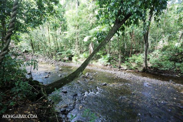 Creek along the Jindalba boardwalk [australia_daintree_194]