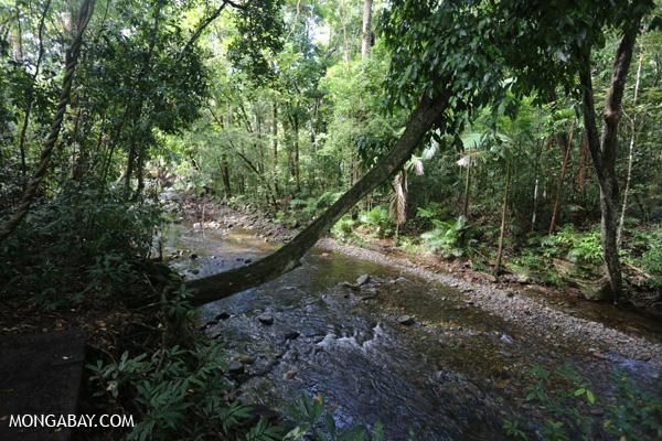 Creek along the Jindalba boardwalk [australia_daintree_196]