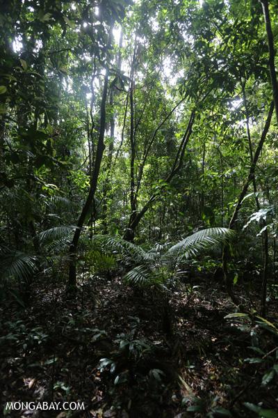 Daintree rainforest [australia_daintree_202]