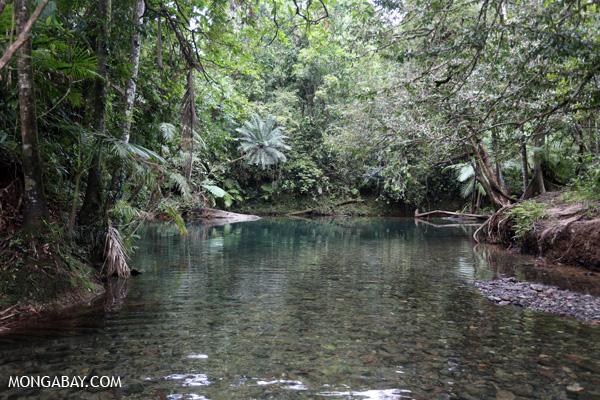 Daintree swimming hole [australia_daintree_296]