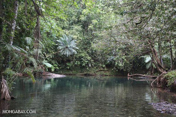 Daintree swimming hole [australia_daintree_298]