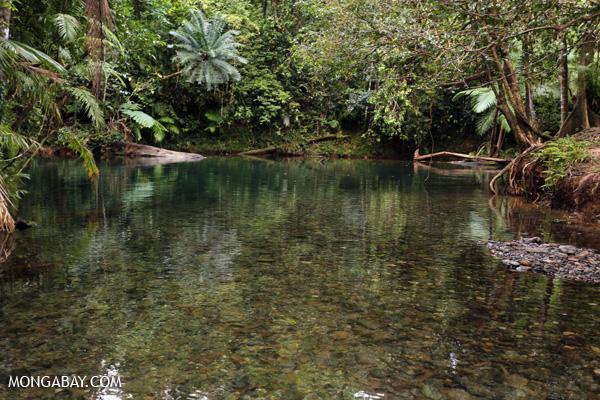 Daintree swimming hole [australia_daintree_299]