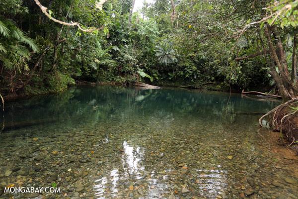 Daintree swimming hole [australia_daintree_303]
