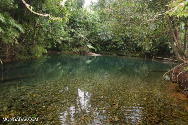 Daintree swimming hole [australia_daintree_304]